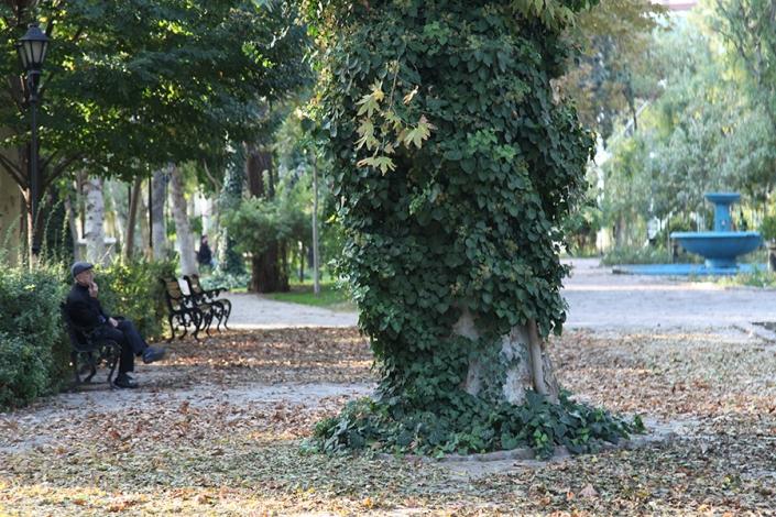 درخت کهنسال باغ ملی محله ارگ