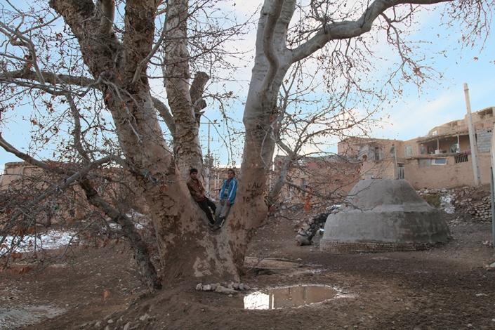 چنار کهنسال روستای ده سرخ،از تفرجگاه های مشهد،جاهای دیدنی مشهد