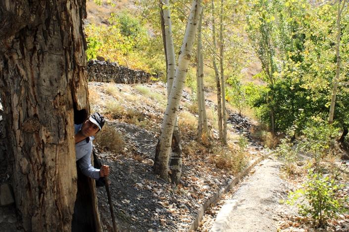 درخت کهنسال روستای مغان،حوالی رودخانه طرق
