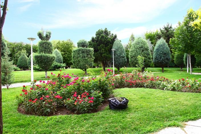 گل رز ایرانی محوطه پارک پردیس،پارک ها و بوستانهای شهر مشهد،جاهای دیدنی مشهد