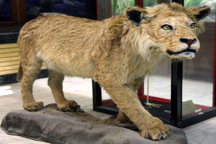 موزه تاریخ طبیعی،جاذبه های تاریخی فرهنگی شهر مشهد،جاهای دیدنی مشهد