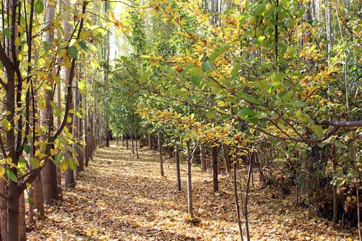 باغات روستای مارشک