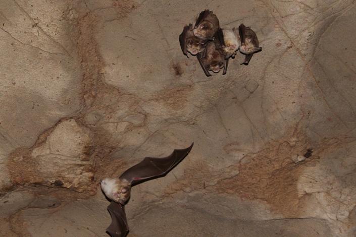 خفاش های غار هزار دالان،غار نوردی،جاذبه های گردشگری