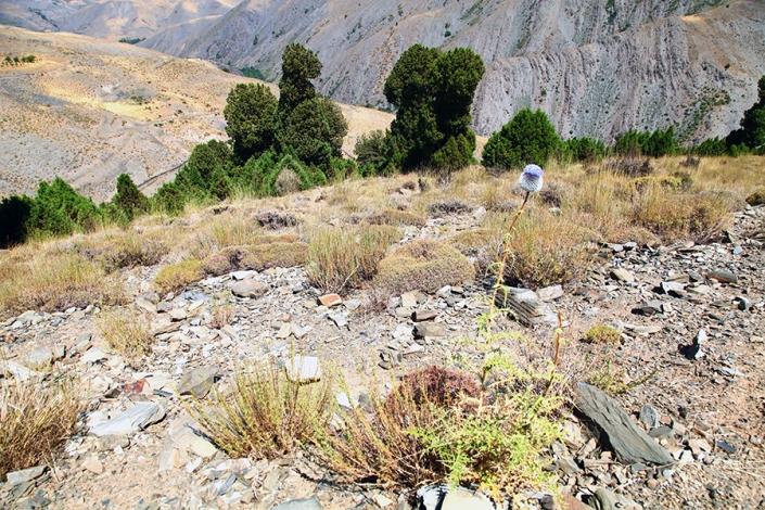 منطقه حفاظت شده بینالود،پوشش درختچه های ارس،رشته کوه بینالود،کوه های اطراف مشهد،جاهای دیدنی مشهد،تفرجگاه های مشهد،تفریگاه های مشهد،کوهنوردی، شیرباد بلندترین قله اطراف مشهد